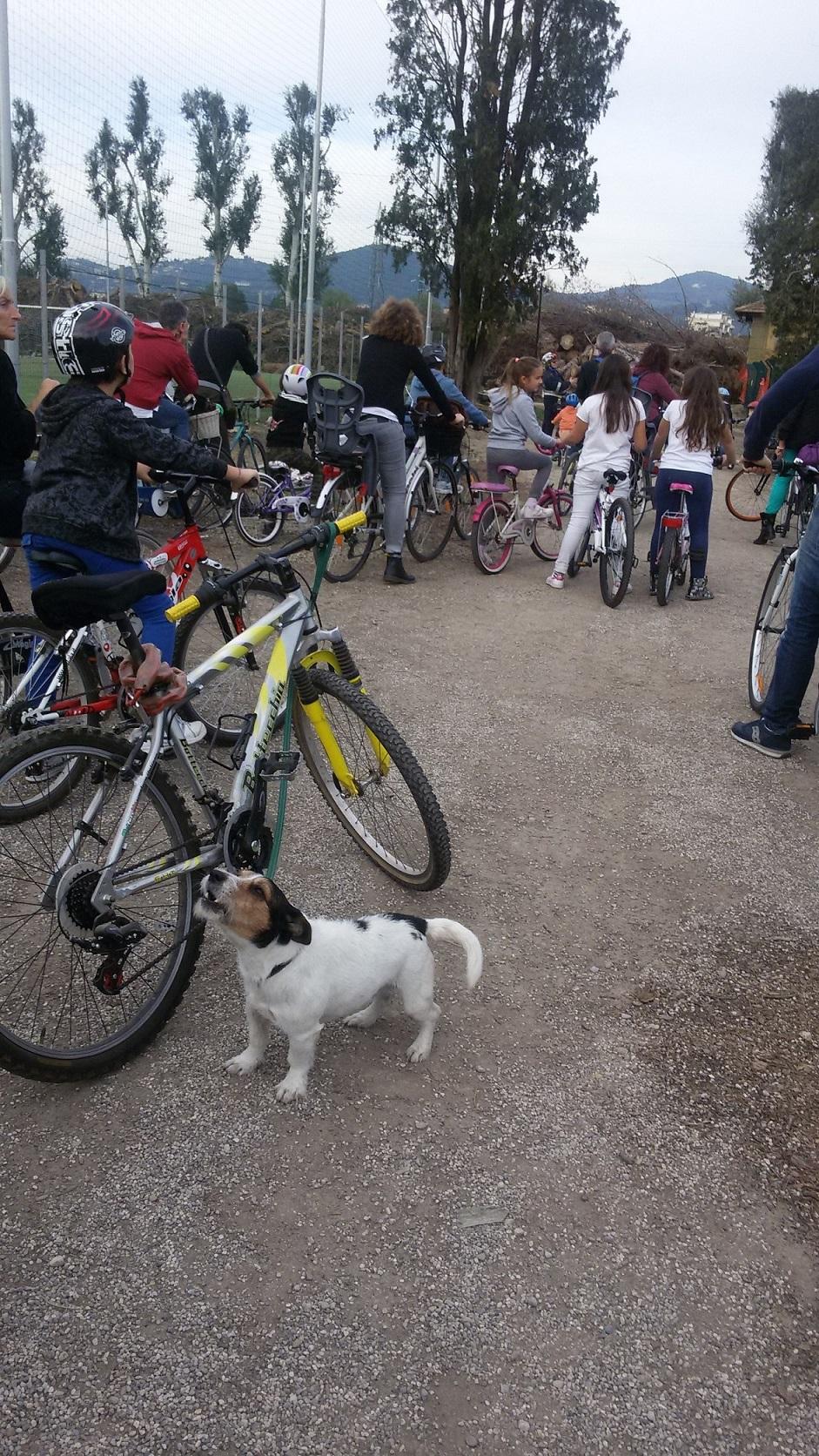 25 ott. il canino ciclista alla partenza