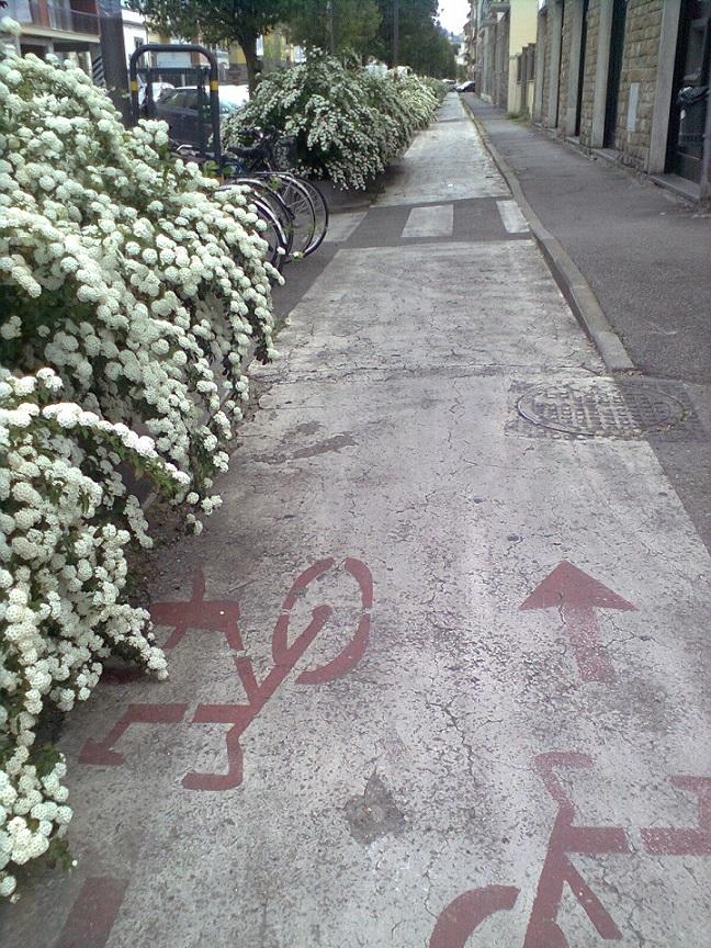 pista cilc in fiore Foto0920